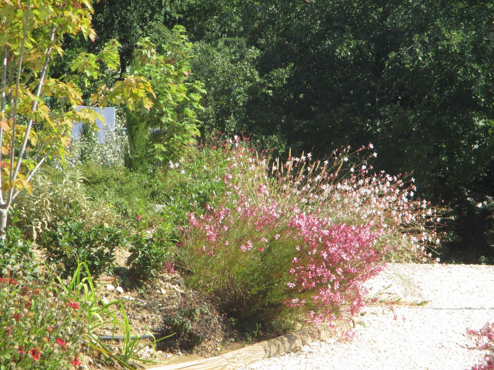 Le jardin du Mas de Molines en Ardèche