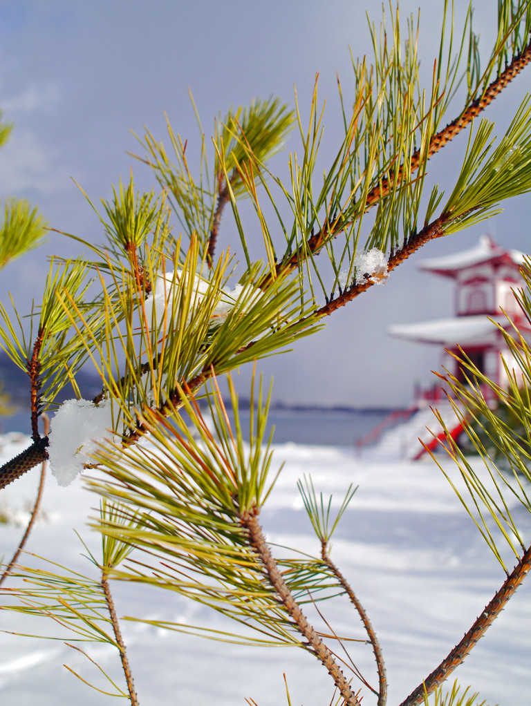 北海道の雪は気温が低いので着氷しづらいのですが、12月初旬だと気温が高い(0度くらい)ので木も雪に、あ、天気が良いので溶けてますね