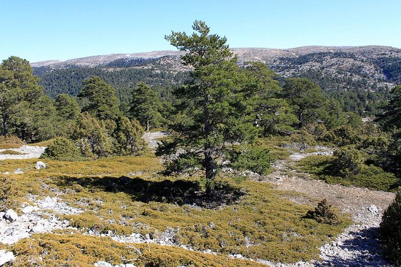 Vista del Alto de las Barracas, también llamado Cerro Calderón, situado en el parque natural de Puebla de la San Miguel. Perteneciente a la Sierra de Javalambre su punto más alto alcanza los 1837 metros. Puebla de San Miguel, provincia de Valencia, Comuni