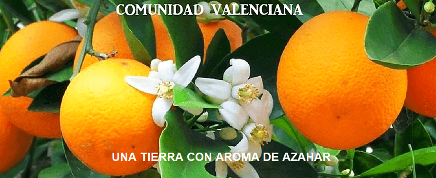 La Real  Señera Valenciana del reino de Valencia, no se inclina ante nadie.