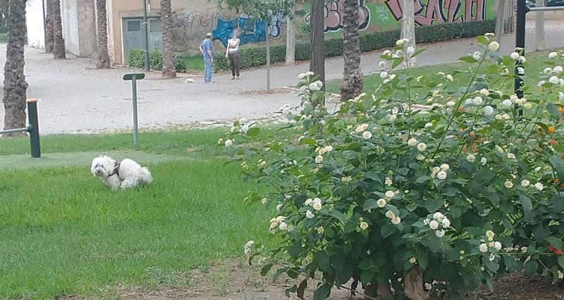 Perros sueltos y sin bozal, heces sin recoger, suciedad y peligro para la salud en la Ciudad de Valencia.
