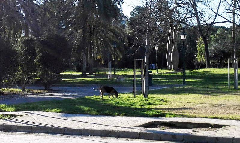 En València los perros es un problema de seguridad y de salud pública.