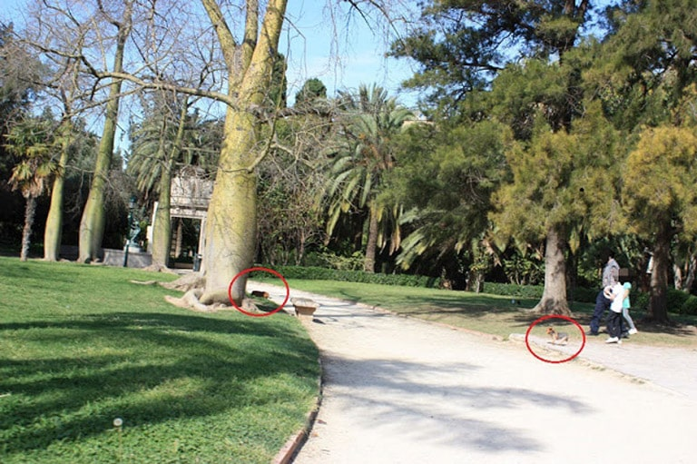Mascotas en parques y jardines  de València en donde  mayoría de los excrementos no se recogen.