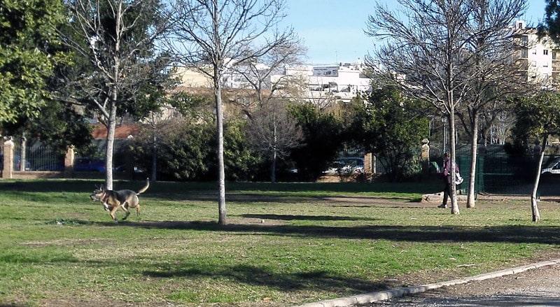 Perros  en parques y jardines  de València  sin correa sueltos y sin bozal, heces sin recoger, suciedad y peligro para la salud.