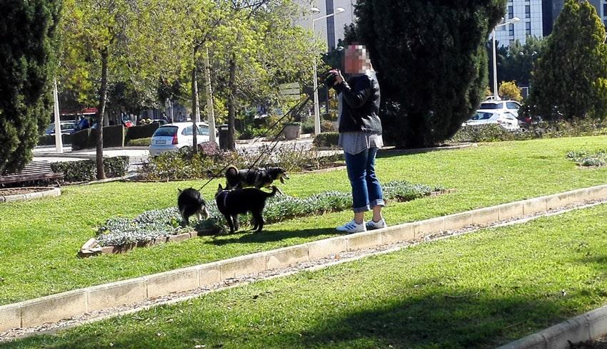En València los perros es un problema de seguridad y de salud pública por la falta de respeto de sus amos.