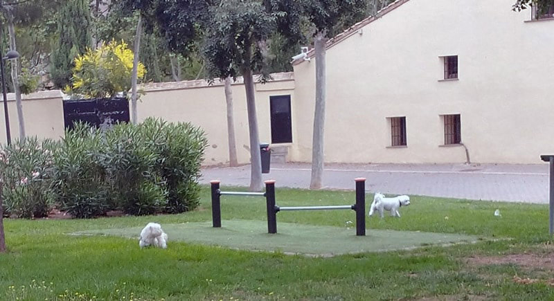 Mascotas en parques y jardines  de València en donde  la mayoría de los excrementos no se recogen.