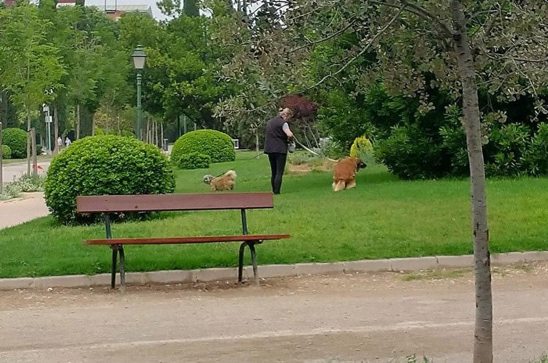 Mascotas en Viveros de València en donde  la mayoría de las heces no se recogen.