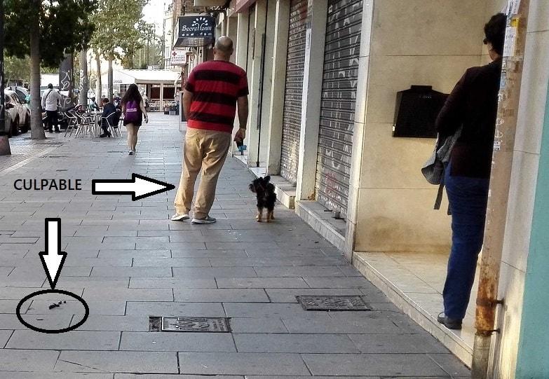 Un ejemplo de los   impresentables que no recogen la caca de sus animales en València,  perros sueltos y sin bozal.