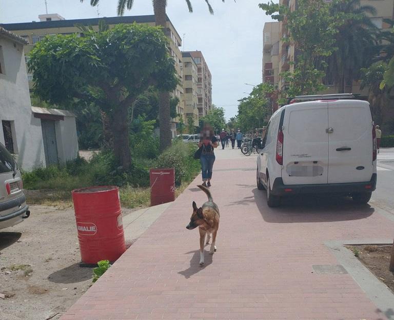 Perros sueltos y sin bozal, heces sin recoger y suciedad y peligro para la salud en Benimaclet (Valencia9.