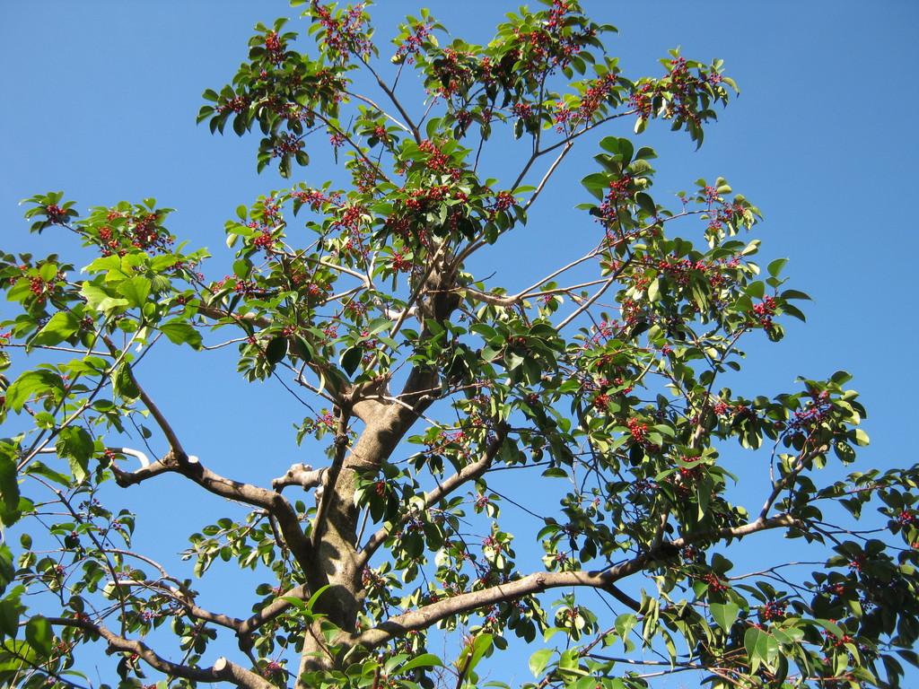 秋の街路樹。