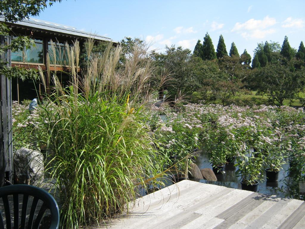 梅小路公園、朱雀の庭。素朴で美しい和庭。Suzaku no niwa garden
