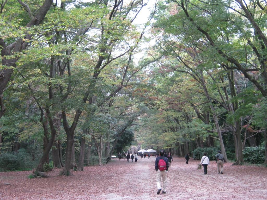 下鴨神社。南側参道から歩く。Shimogamo shrine