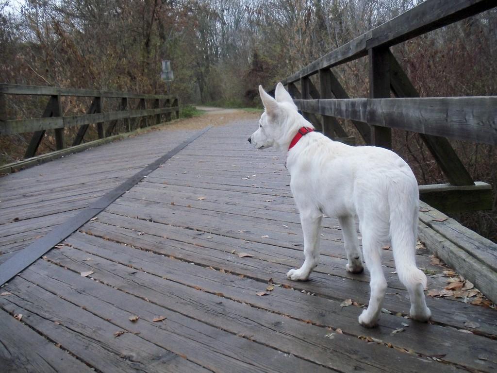 El Lobo of the White Heaven