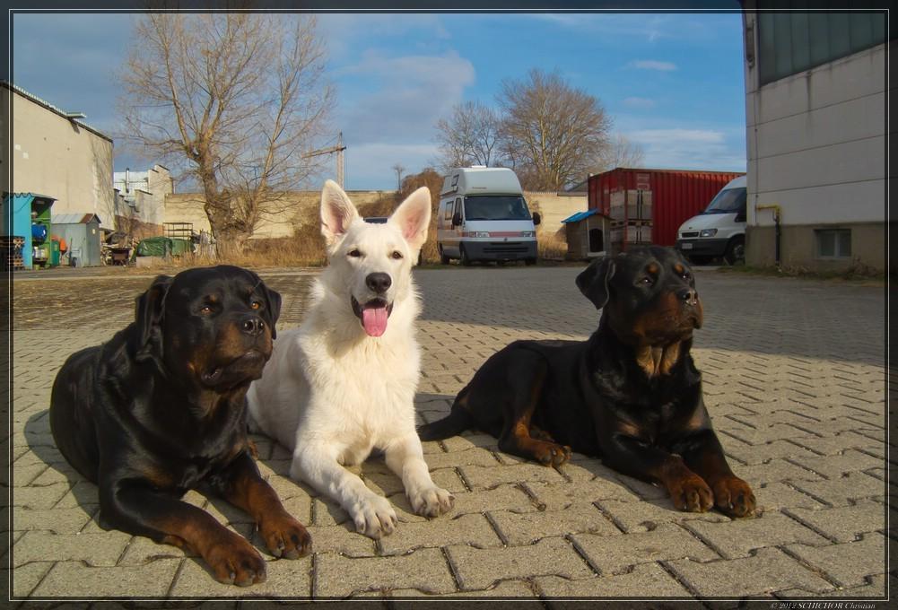 El Lobo of the White Heaven & Freunde 2012