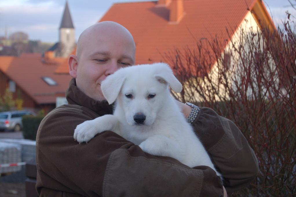 weisser schäferhundwelpe of the white heaven d 2011