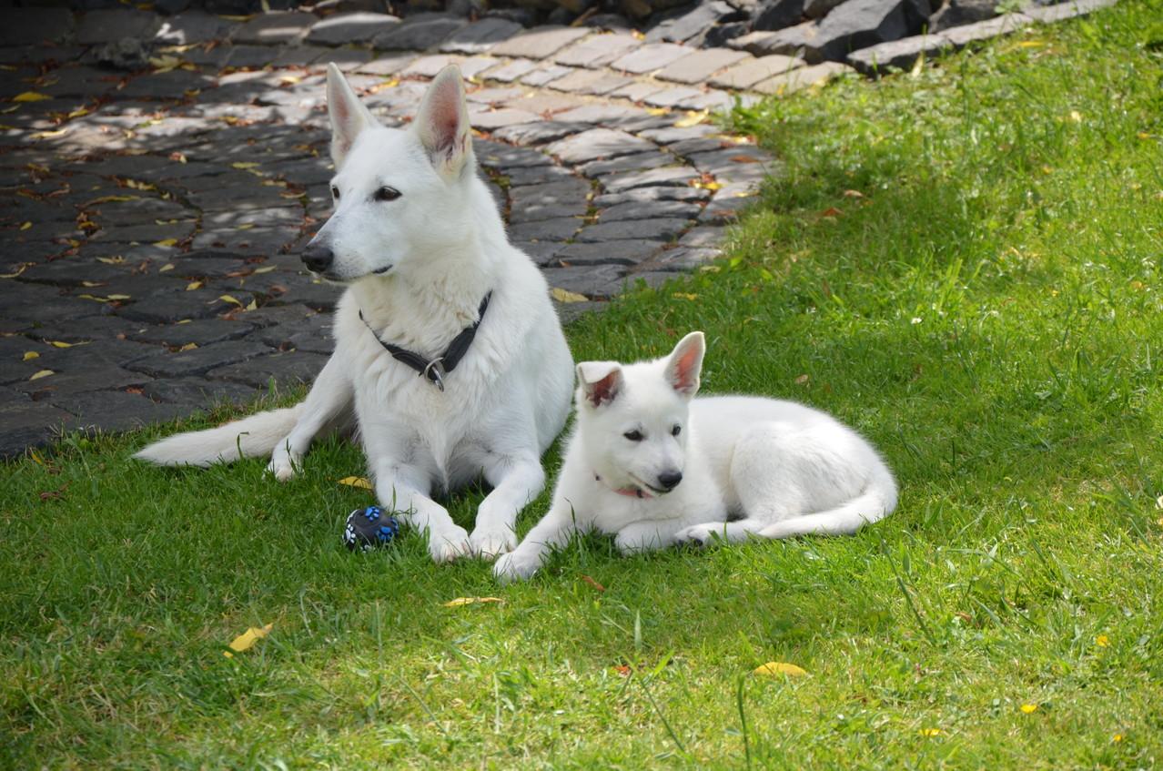 Evita & Franka Shateen of the White Heaven