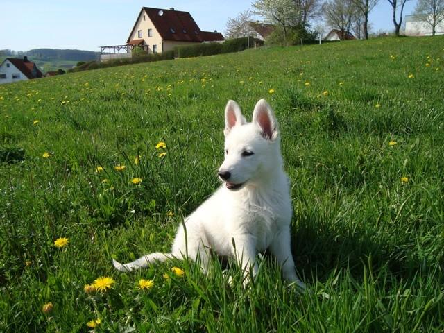 Cira of the White Heaven