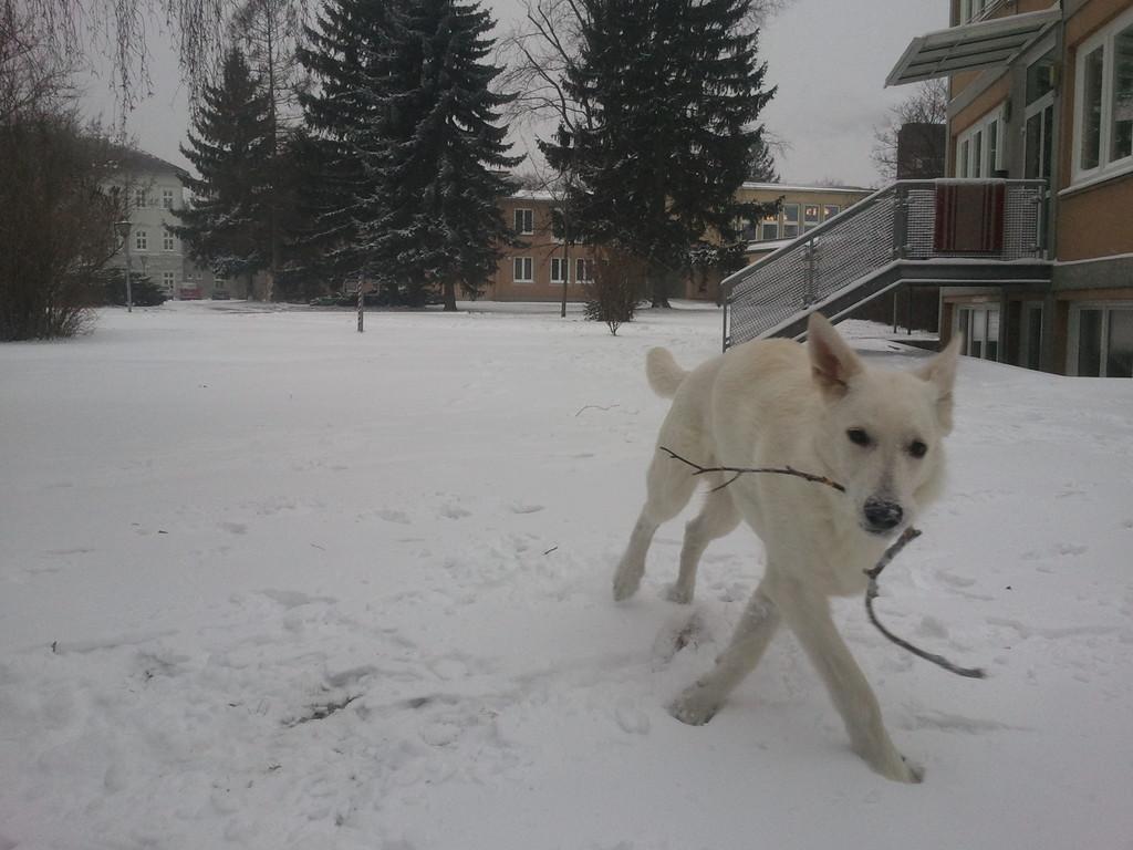 El Lobo of the White Heaven Januar 2012