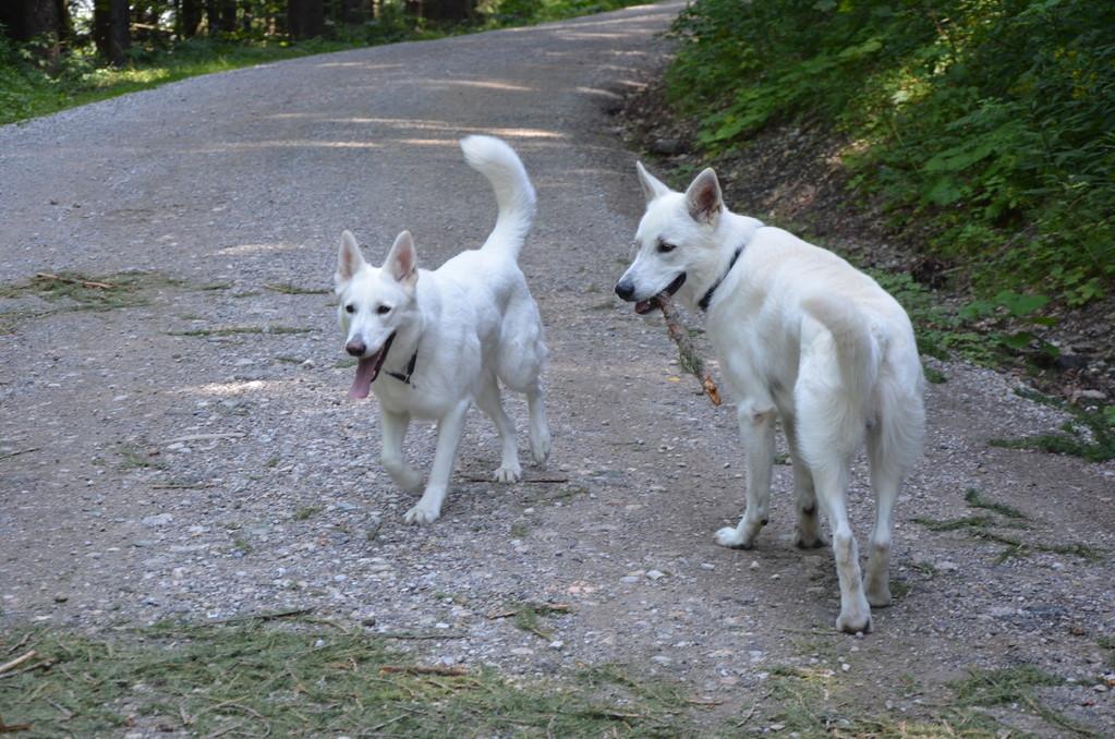 Bo-Zafhira & El Lobo Juli 2012 Zauberberg / Österreich