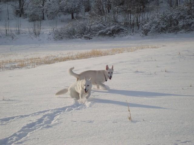 Baron & Cira of the white Heaven Dezember 2010
