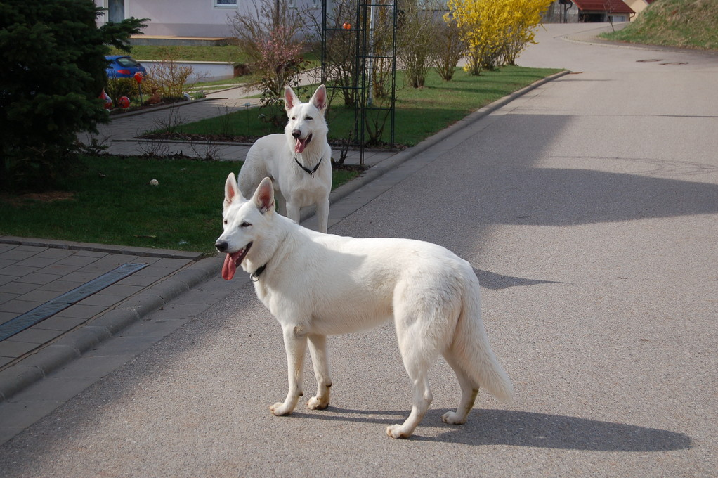 Baron & Cira of the White Heaven