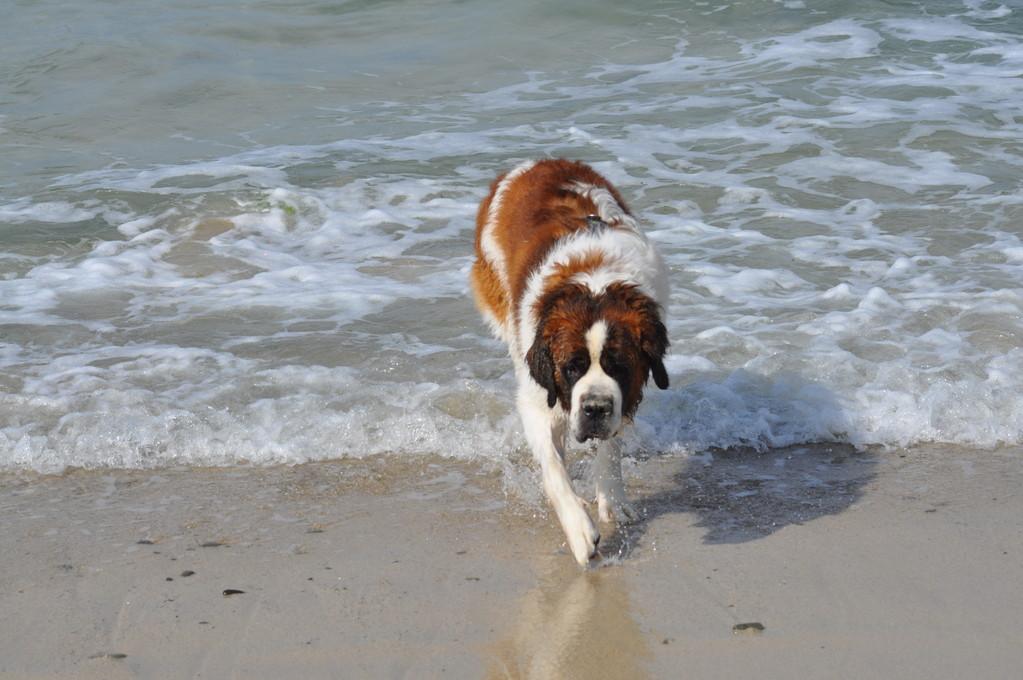 Leo am Strand