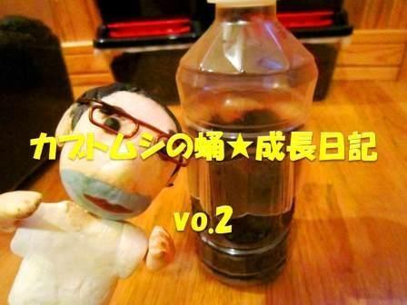 カブトムシの蛹★成長日記vol.2