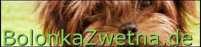 Bolonka Zwetna Züchter