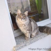 Pelageya, 5 months
