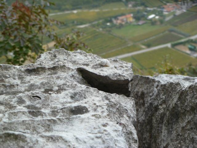 Fast schade - die Alpinschnecke am Ausstieg