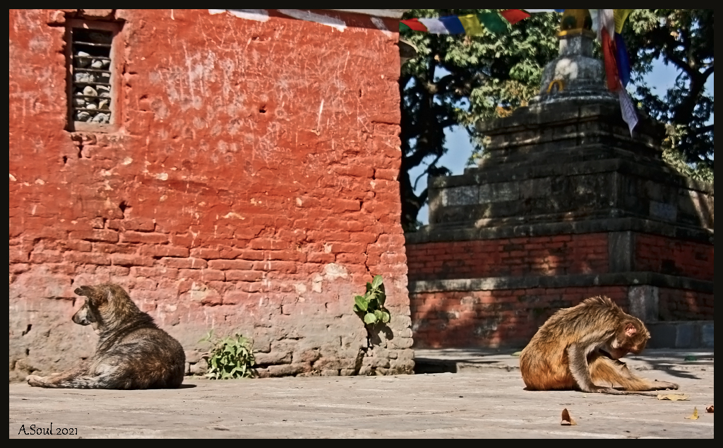 Hund und Affe/Kathmandu