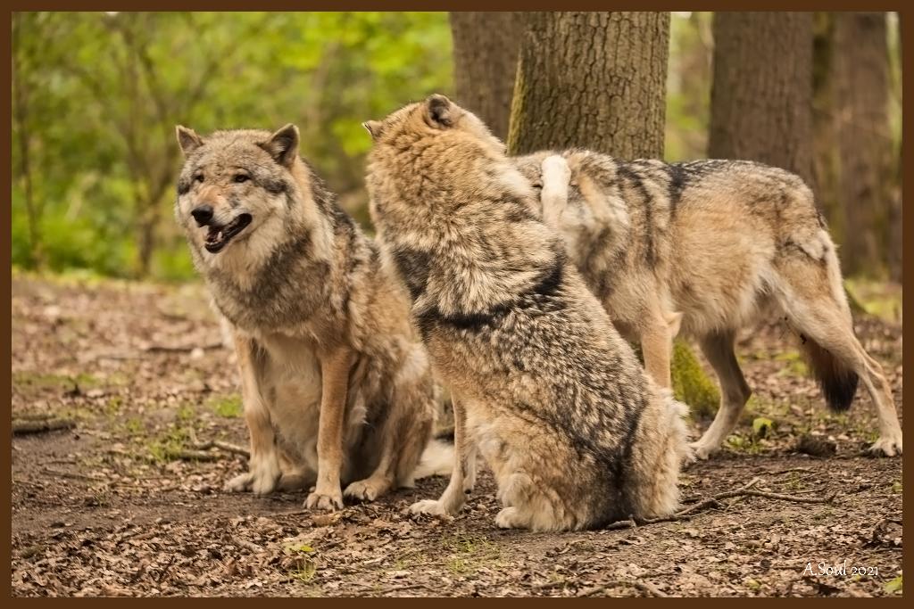 Odin, Remus und Sirius