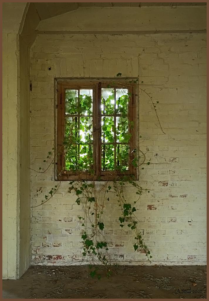 Dornröschenfenster