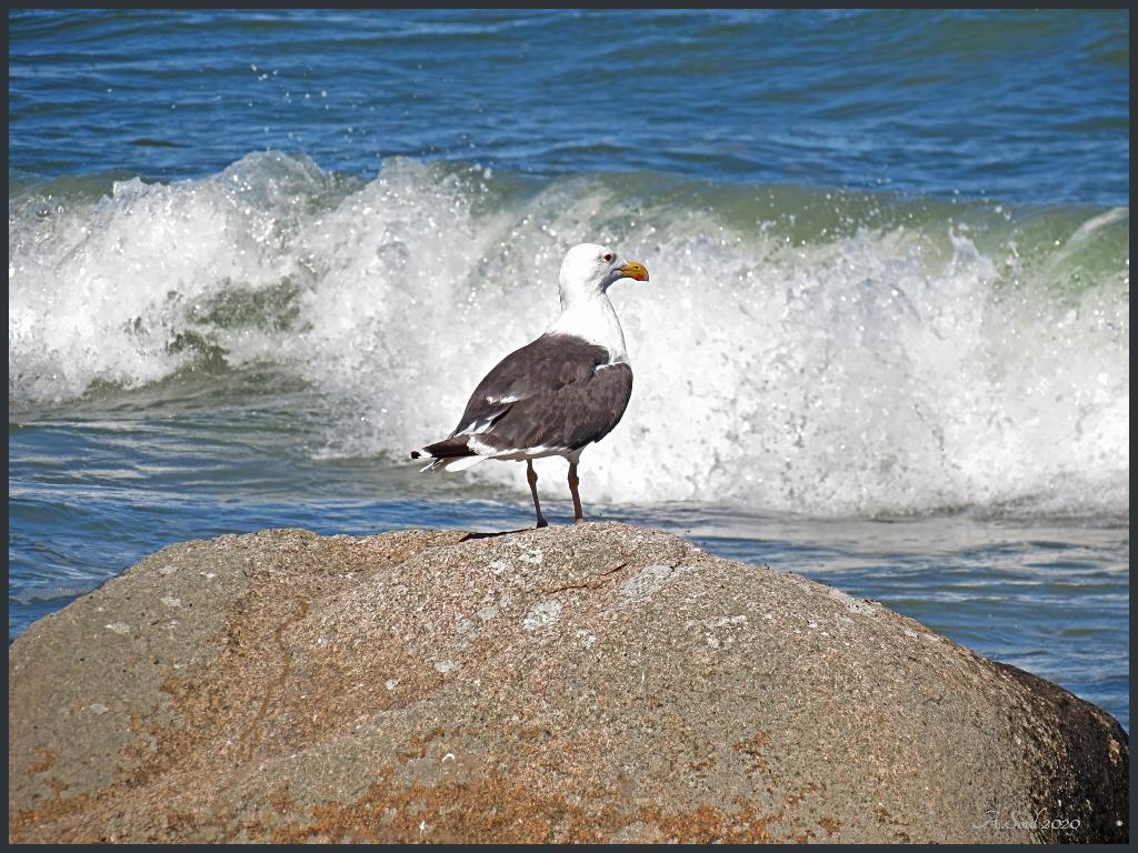 Möwe beobachtet die nächste Welle
