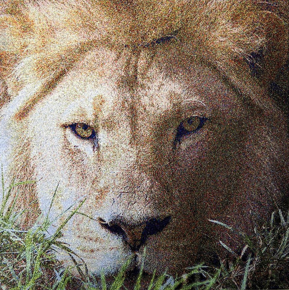 見つめるライオン  no.M-2   w40*40cm