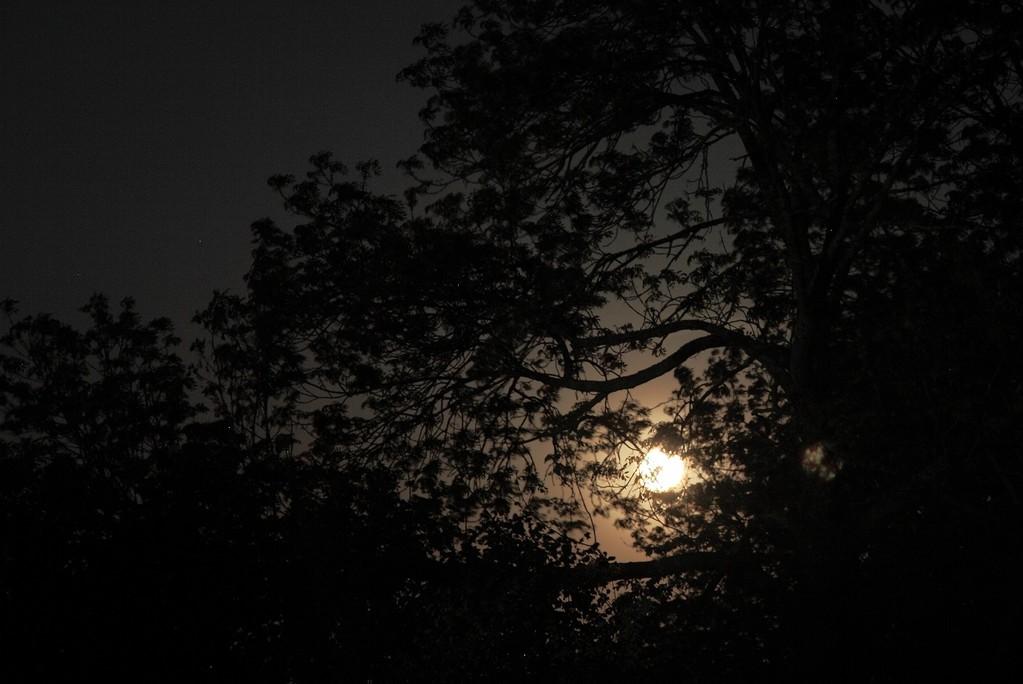 Coucou de lune                                                                                      Jack