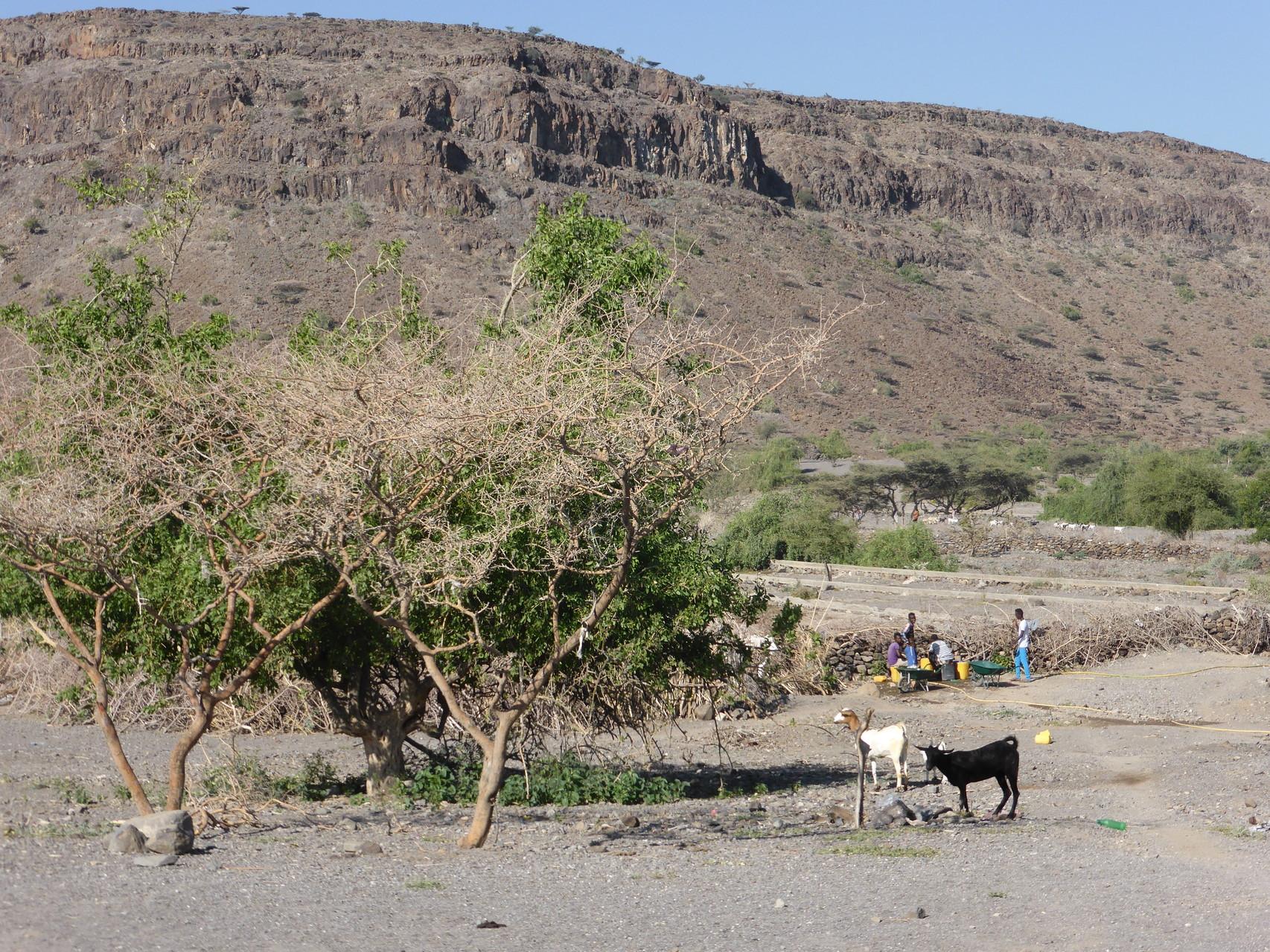Gowra. transport de l'eau potable avec les brouettes