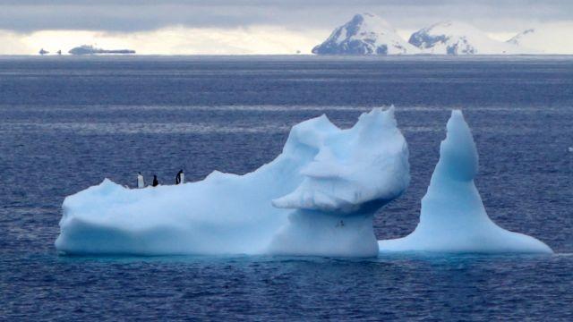 unsere Pinguin-Freunde begleiten uns noch bis zur Drake-Passage