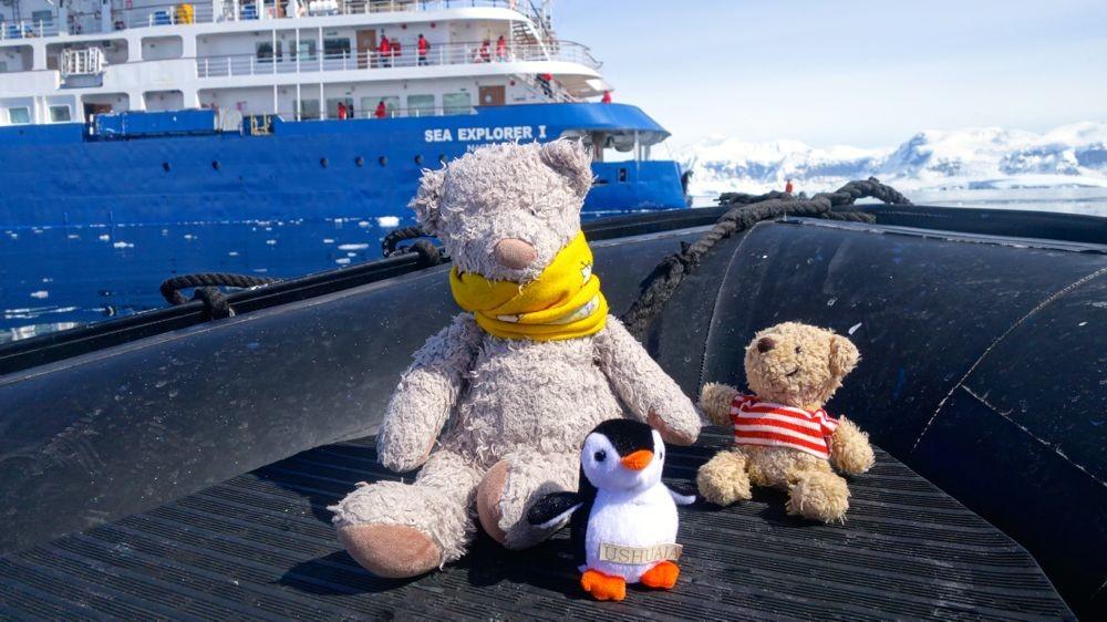 Ein neuer Freund: Chenyang, der Teddybär aus Taiwan!