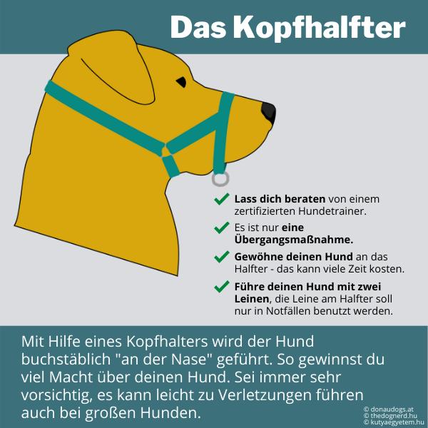 Die unsachgemäße Anwendung von Kopfhalftern, kann zu Verletzungen deines Hundes führen.