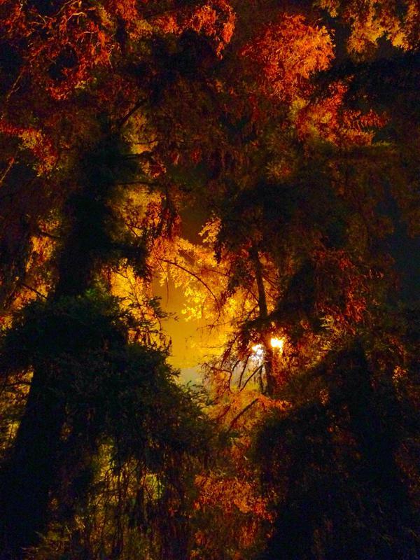 """Griffith Park under our lights Ep804 #Castle"" (c)@AndrewBikichky"