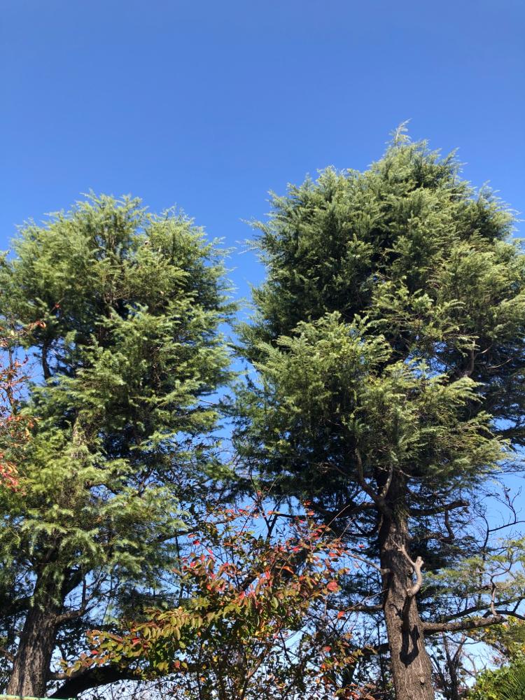 木たちも、見守ってくれてます🌲