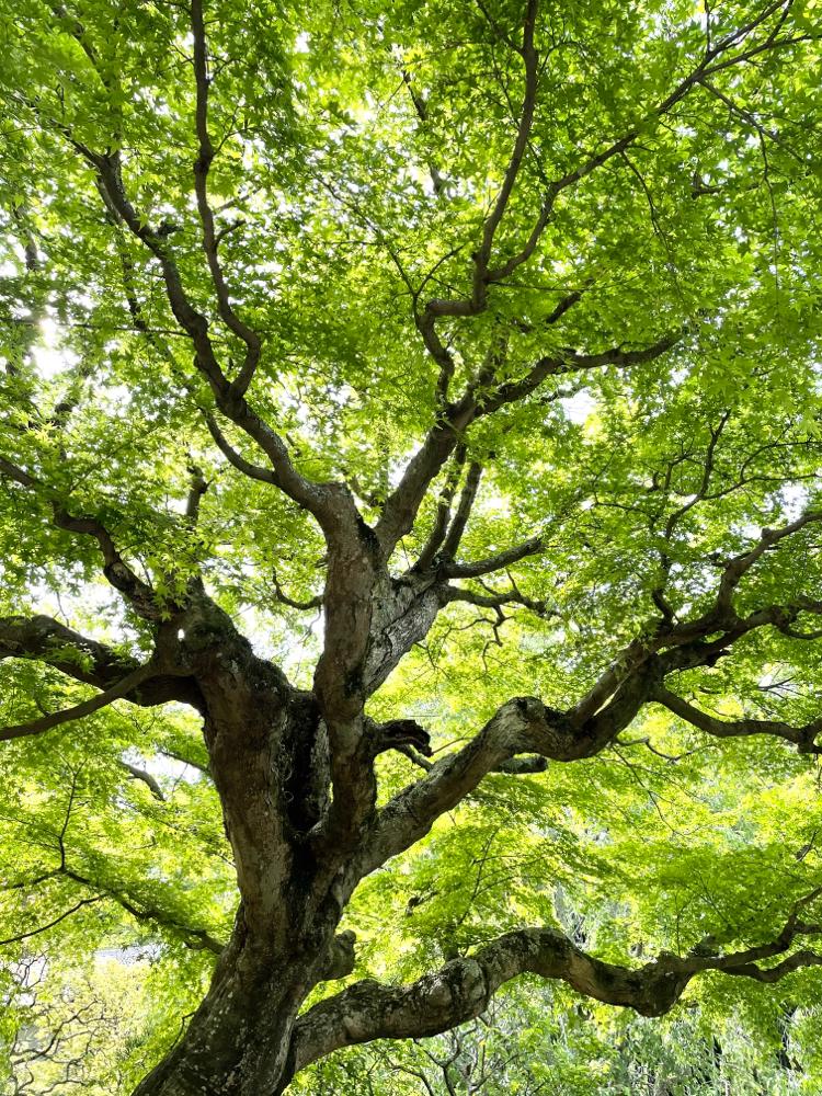 東慶寺の木🌳