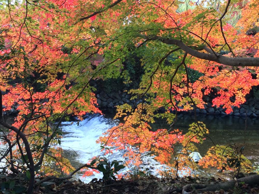 いつかの京都。いろとりどり。