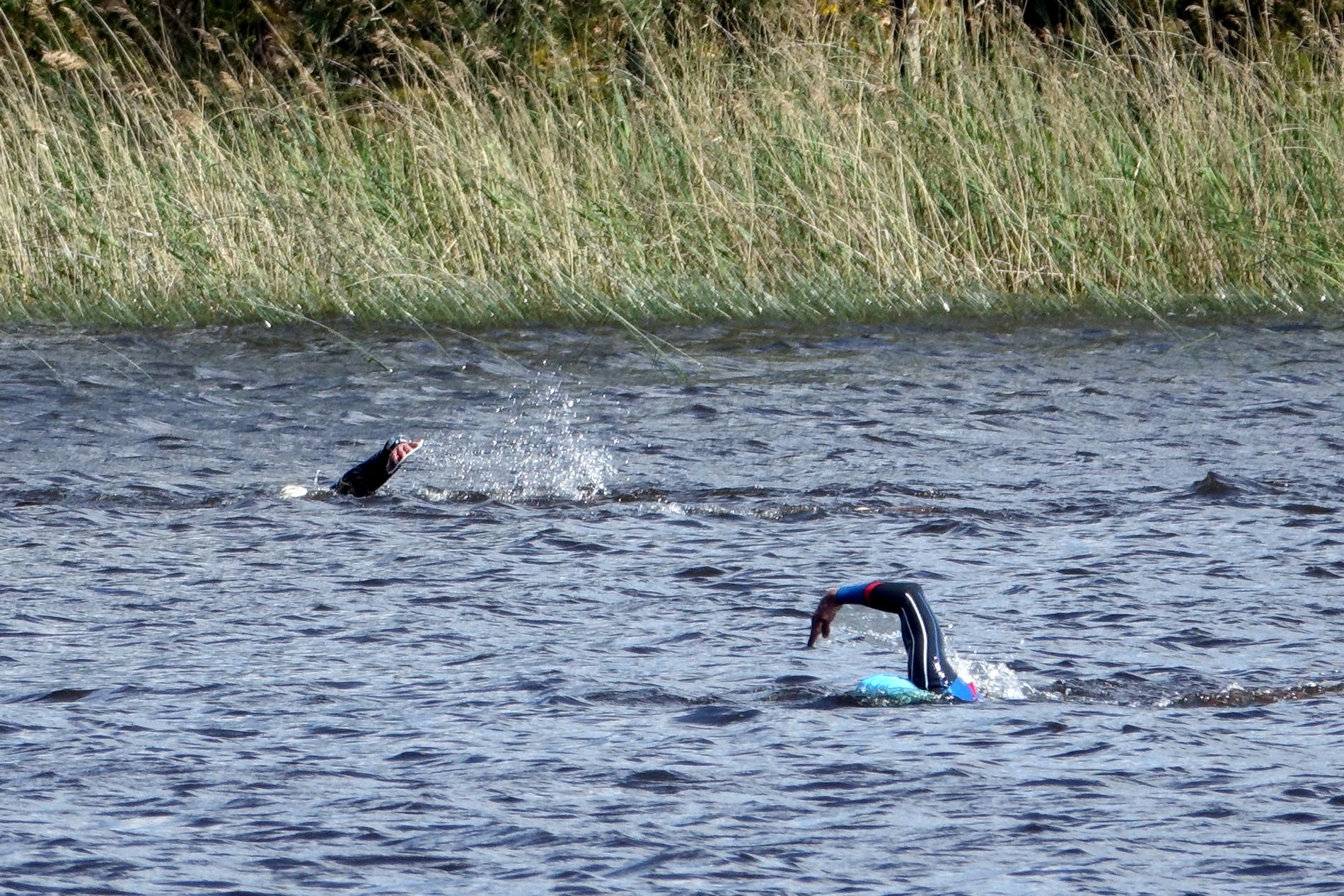 tu vois des nageurs dans une eau limpide mais un tantinet fraîche, .......