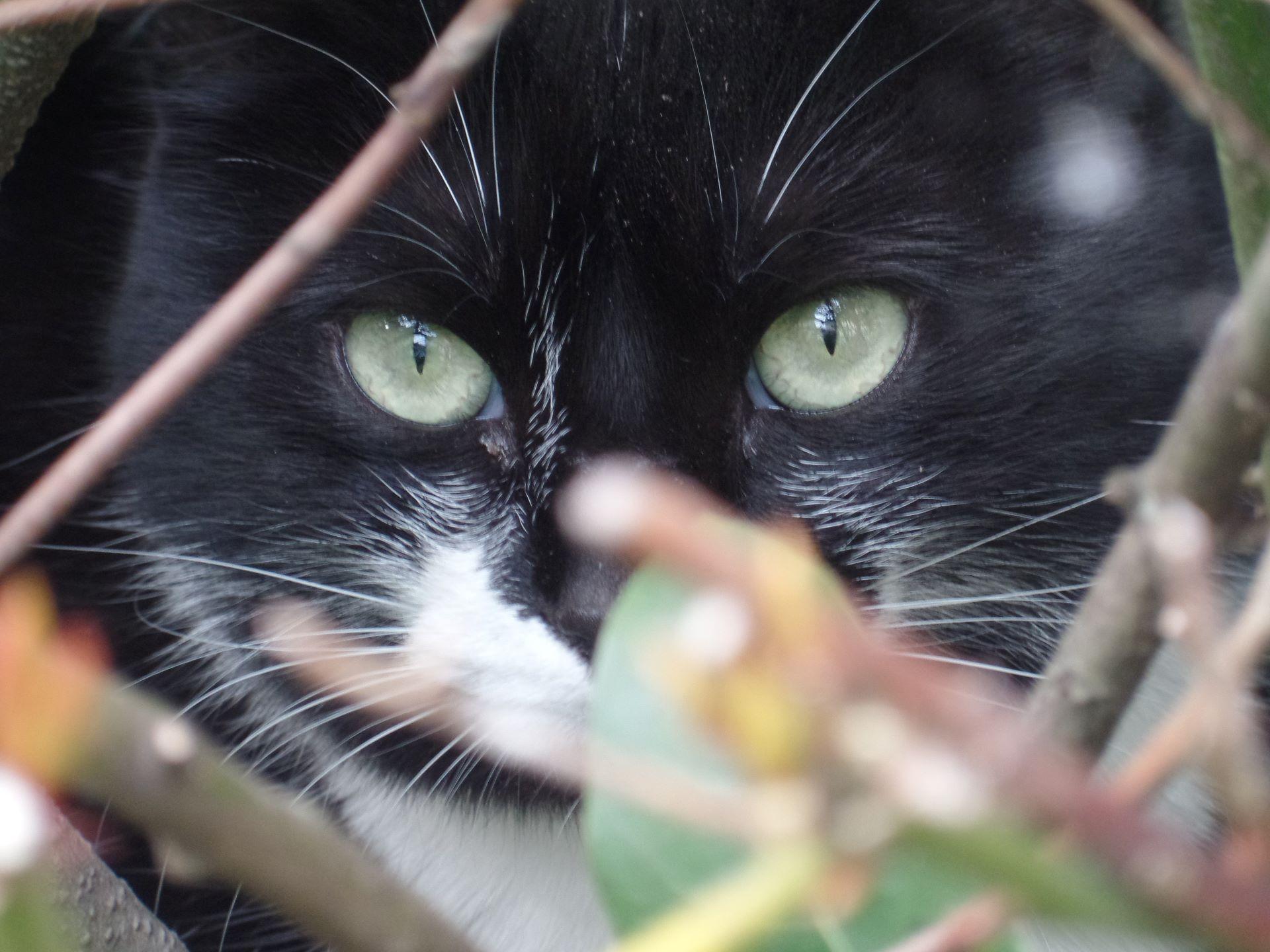 5.  que le chat du voisin