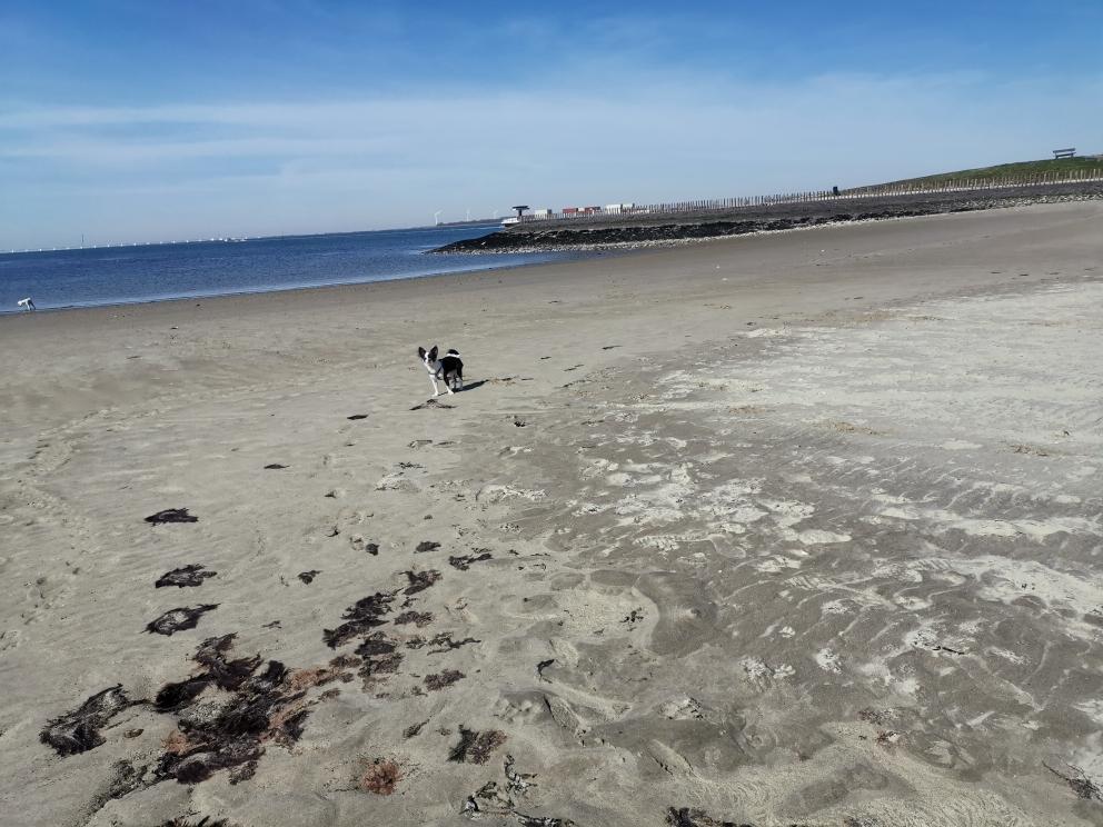 Strandje Stavenisse