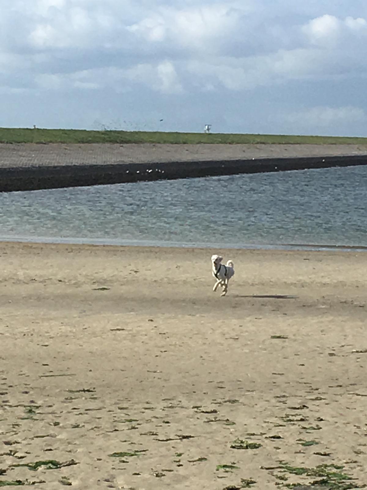 Kleiner Strand von Stavenisse