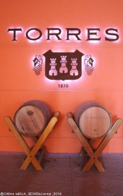 winery of Torres