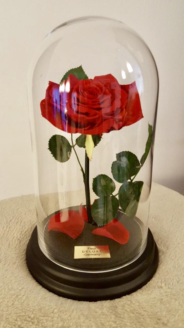 konservierte rosen ab 34 infinity rose in glas. Black Bedroom Furniture Sets. Home Design Ideas